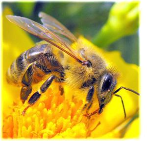 Včelařské potřeby, včelí úly a produkty